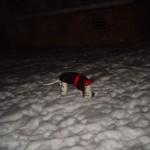 Något intressant finns under snön!