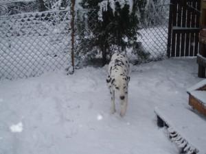 Manne i snö