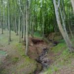 Den fina bokskogen i Middelfart