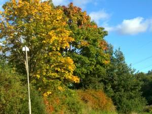 Träd med fina färger