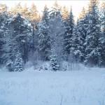 2010-blandat-host-vinter-006
