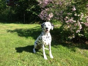 Daisy 10 år!